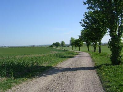 Grusväg, kantad av kastanjeträd på ena sidan, genom öppet landskap. foto: Reb Dutius