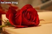 hallawa.blogspot.nl