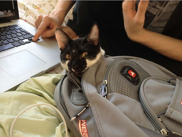 cat, funny cat, cat pictures, cat traps in backpack, stowaway cat