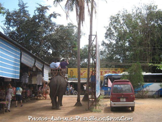 http://2.bp.blogspot.com/-JISZFLUKYAk/Tt-Hj9-d6JI/AAAAAAAACgY/UQ4h2pz0o4U/s1600/Elephant.jpg