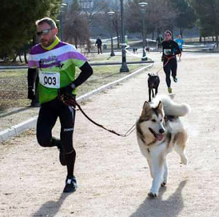 Mushing Aranjuez