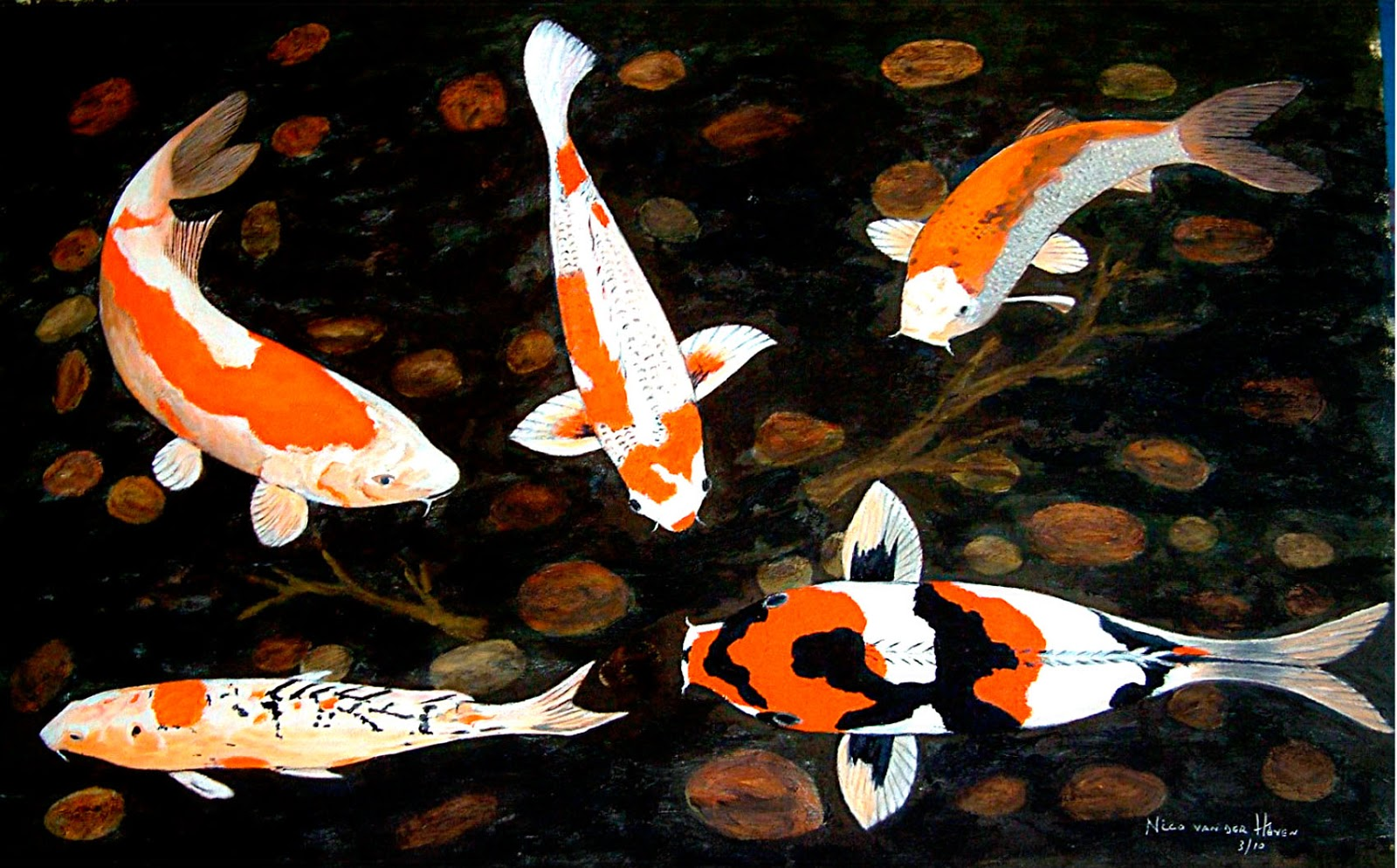 Koi fish hd high definition wallpapers amazing world for World of koi