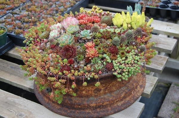 All Purpose Flower Upcycled Garden Art
