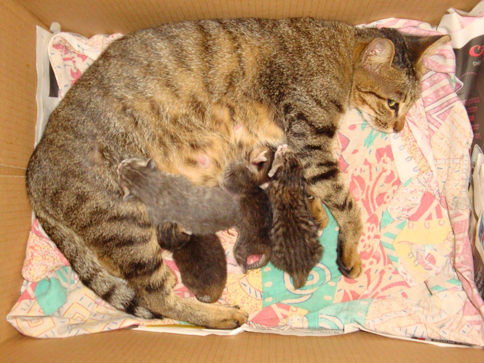 Kucing Le Kucing Kami Dibela Sedari Kecil Sehingga Umur