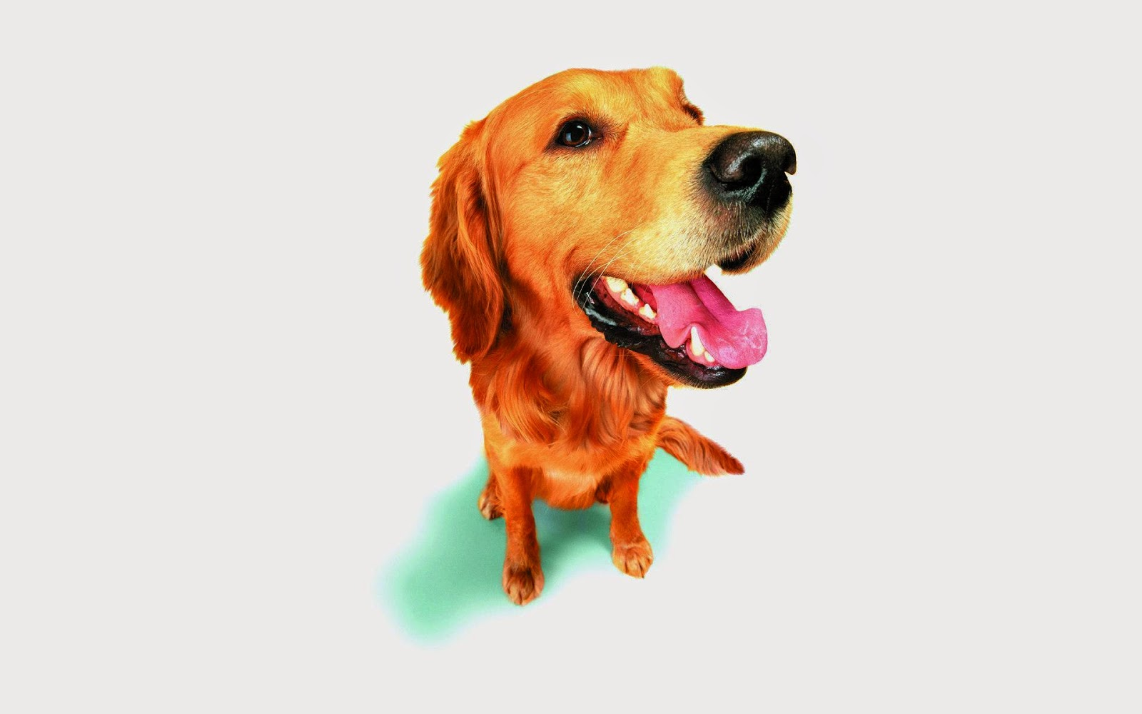pet supplies online Pet supplies : free shipping on orders over $45 at overstockcom - your online pet supplies store get 5% in rewards with club o.