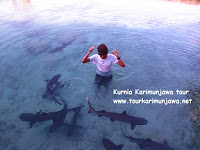 foto bersama hiu karimun jawa