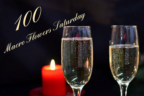 100 Anniversary-Macro flowers Saturday