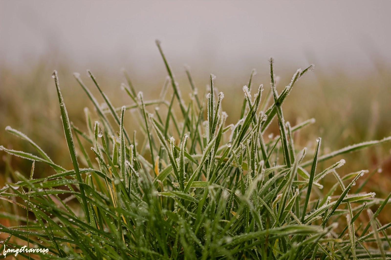 Herbe gelée couverte de givre par un matin brumeux en janvier 2015.