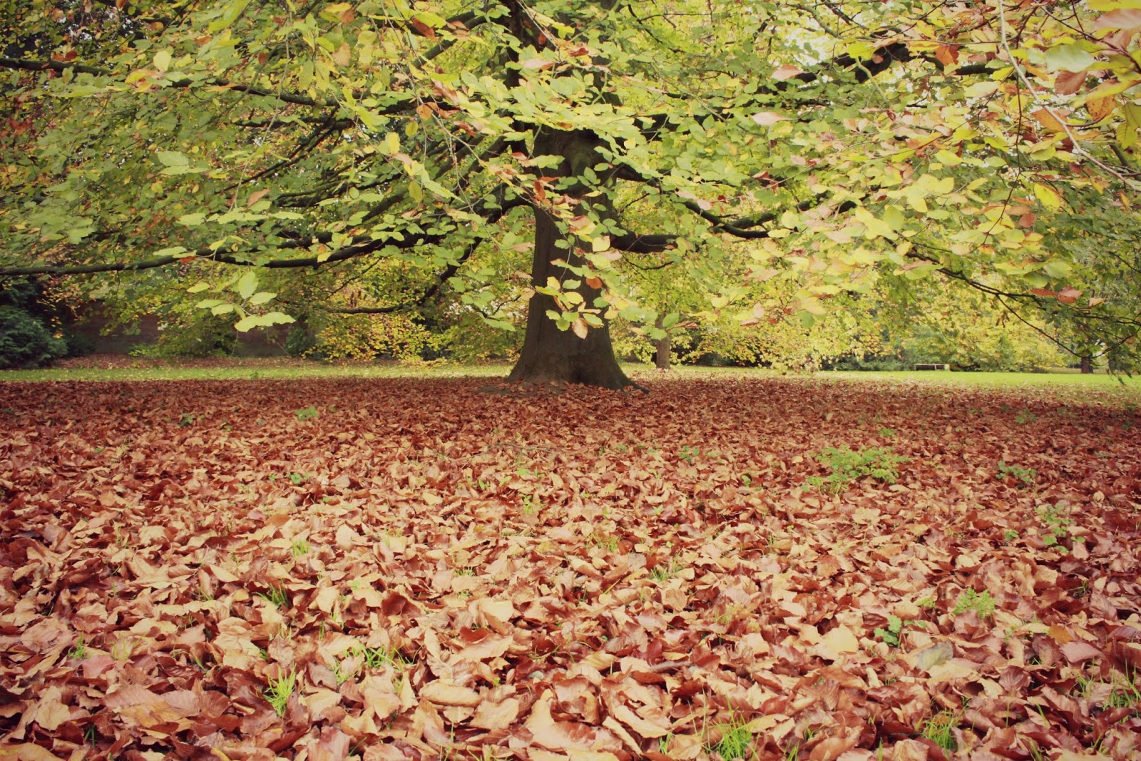 Autumn at The Courts {National Trust} #HDYGG