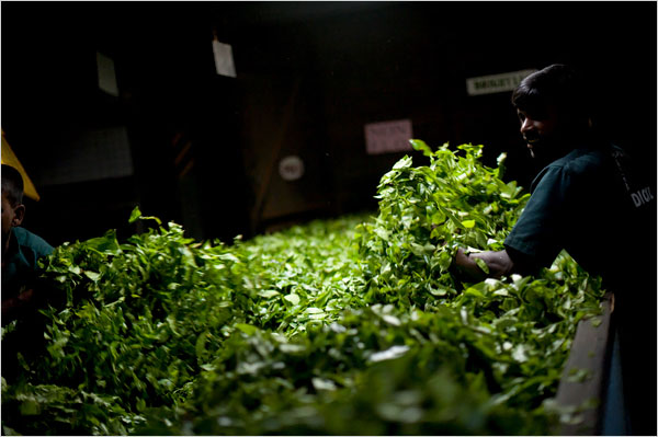 introduction of tea industry in sri The tea industry plays a significant role in the sri lankan economy in terms of foreign exchange earnings and providing employment opportunities for more than a century, the tea industry was the.