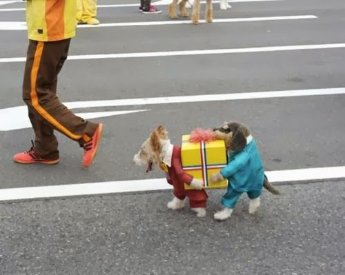 BEST Dog Costume of the Year & Miniature Yorkshire Terrier: BEST Dog Costume of the Year