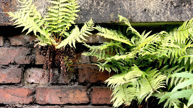 Brick and leaves en route to Blackpool beach