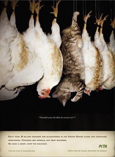 Le galline sono come i gattini... come si può mangiare carne di pollo?