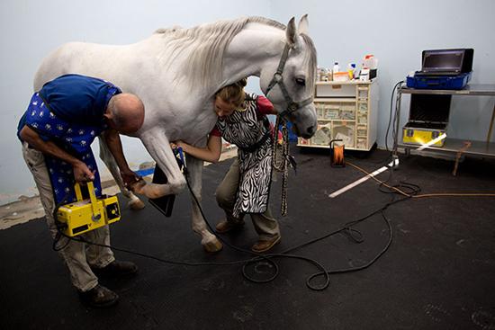 Tiến sĩ Gal Kelmer và nữ kỹ thuật viên đang chụp X quang cho một con ngựa biểu diễn.