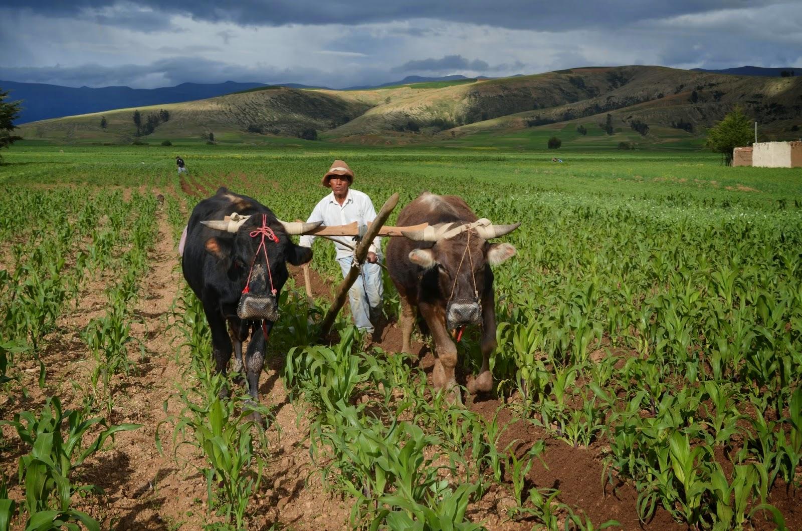 Resultado de imagen para agricultura huancayo