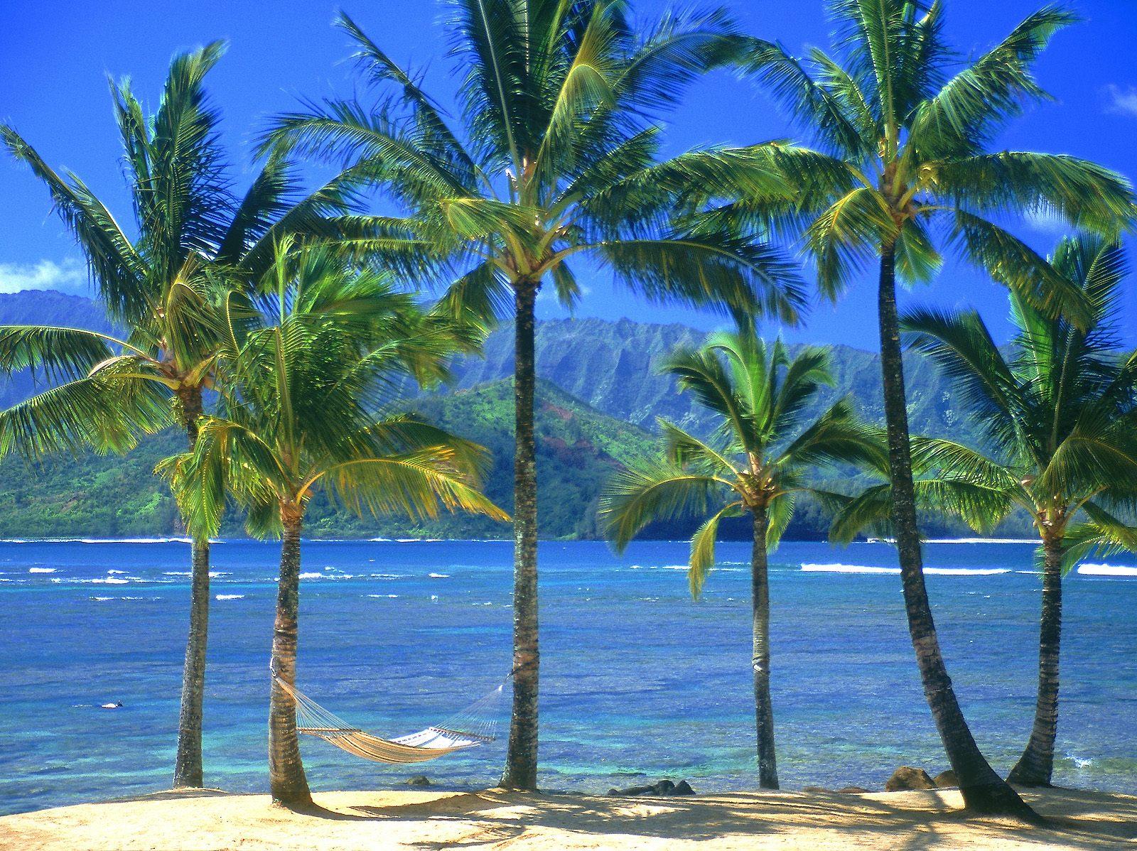 http://2.bp.blogspot.com/-JLsOG2JVPBE/UCm1OIMLBuI/AAAAAAAAM6c/qMNXmHW_1dA/s1600/wallpaper-palmeiras-de-kauai-5657.jpg