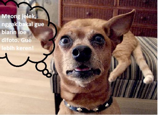 Foto lucu binatang!: Foto lucu guguk meong