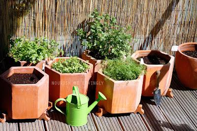 herbs_July