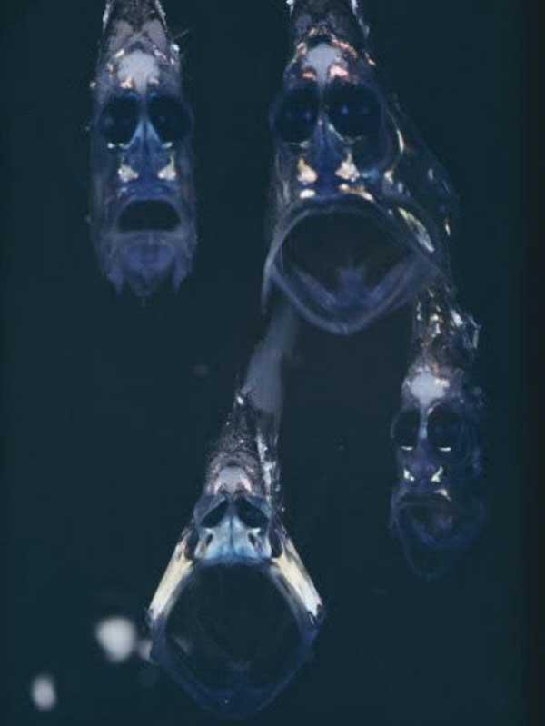 العالم المخيف لاعماق المحيطات