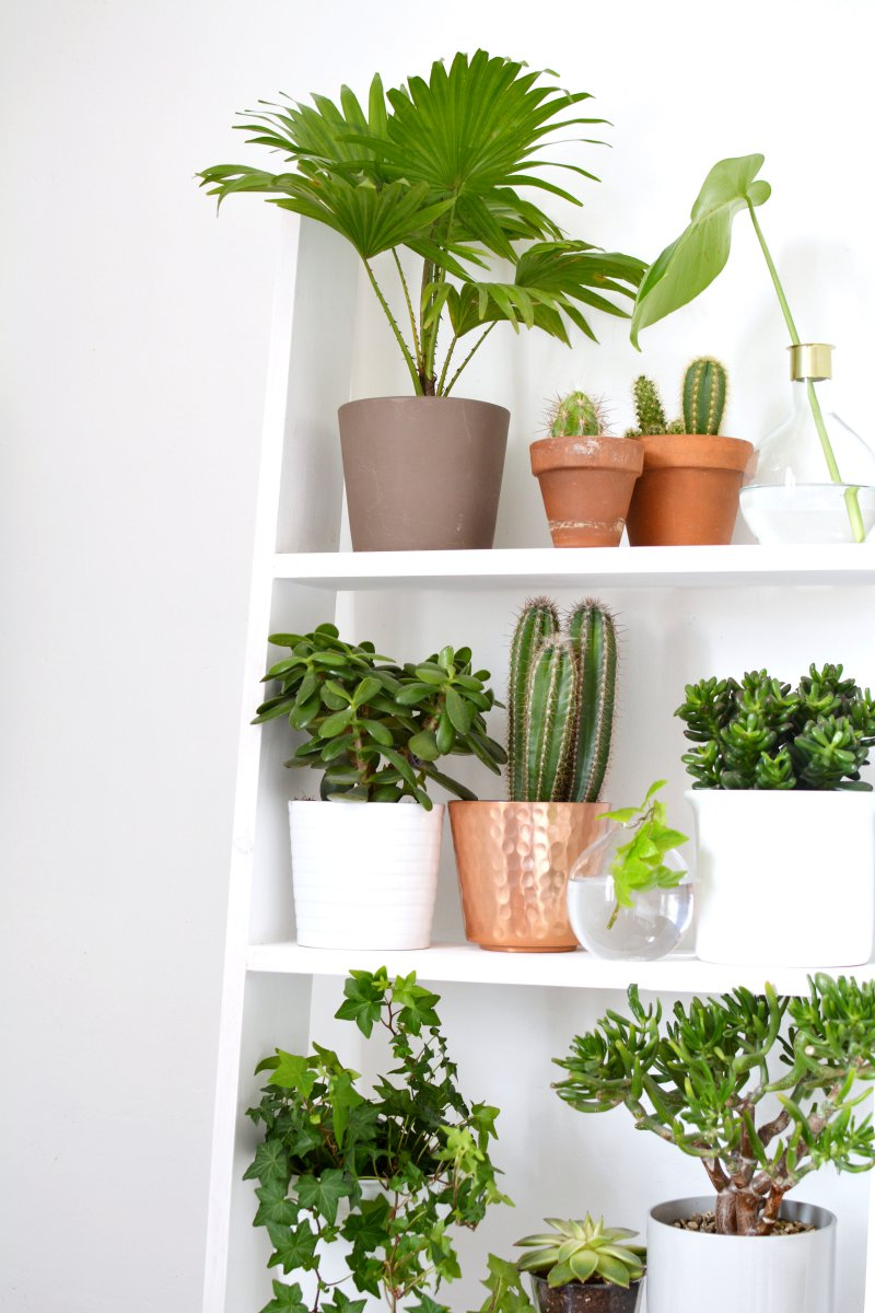 4 ideas for decorating with plants burkatron for Home decor with plants