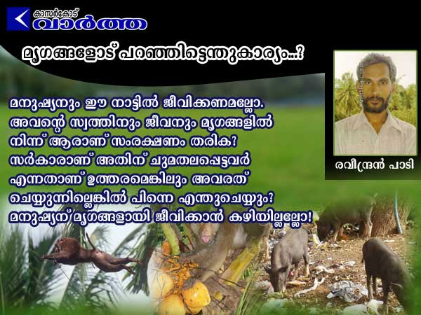 Forest, Police, Belinja, Badiyadukka, farmer, fire, Article, Ravindran Pady, Elephant, Monkey, Government, Waste