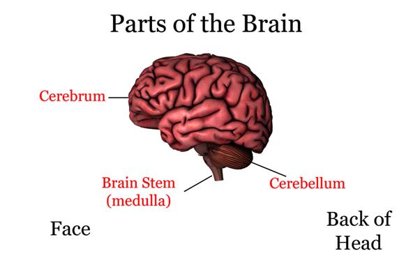 CSA Science 6