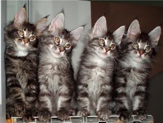 Картинки кошачьих ушек