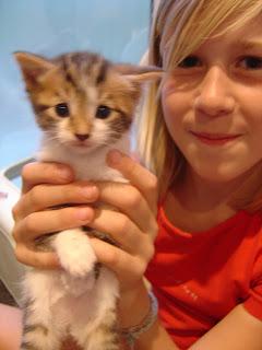 Pippa en witje: 1 van de 6 kittens