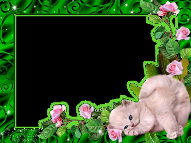 Molduras De Gatinhos