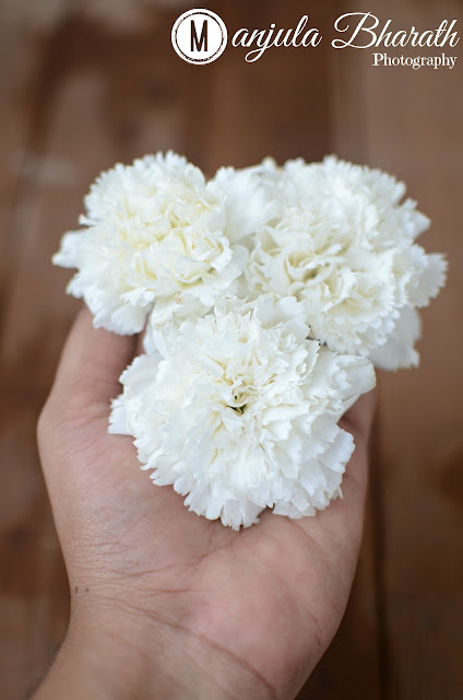 White Flower Photography