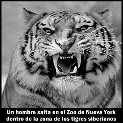 estupidez-hombre-zoo