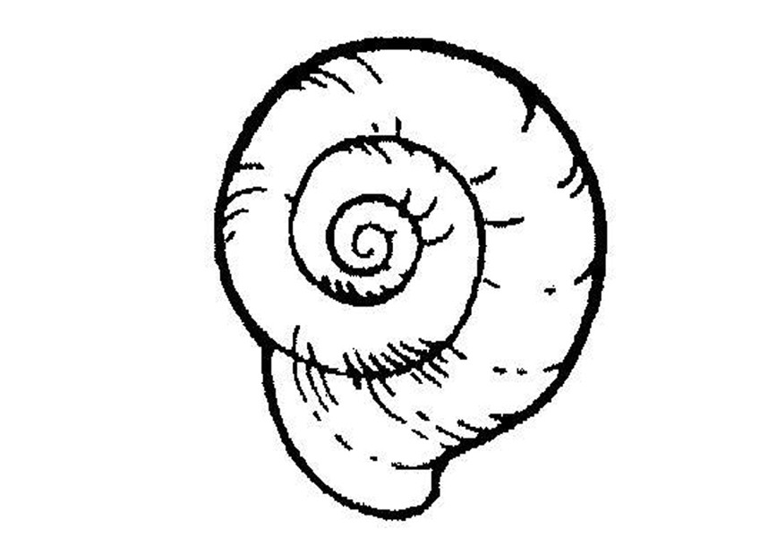 snail coloring pages animals - photo#15
