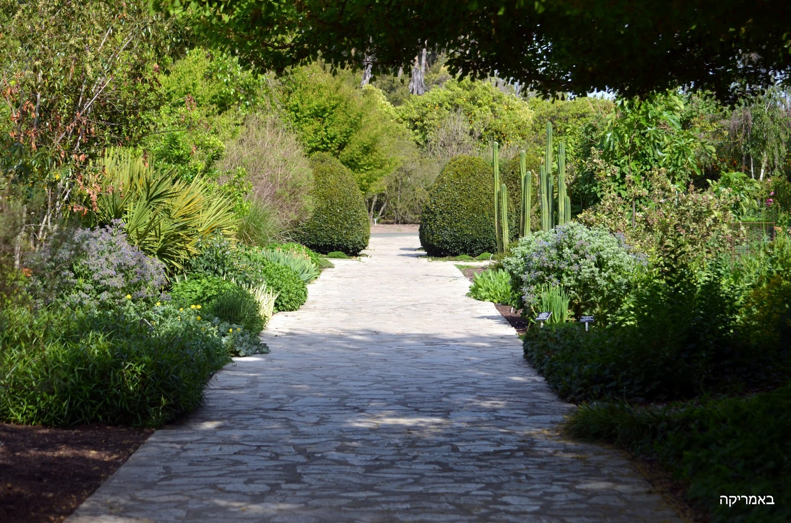 Arcadia Botanical Gardens Arcadia Botanical Gardens Los Angeles County Arboretum Botanic