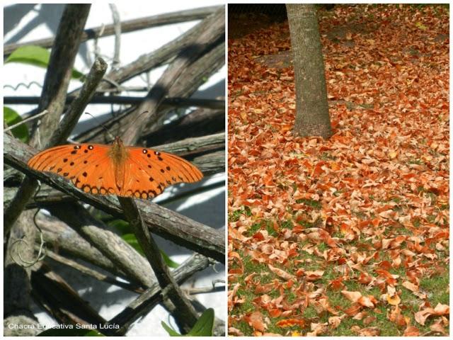 Mariposa y hojas secas - Chacra Educativa Santa Lucía