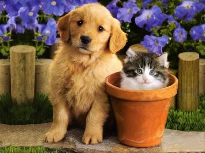 Cute Cats and Dogs Pictures