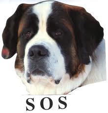saint bernard lesbian singles My saint bernards my saint bernards skip navigation sign in search loading close yeah, keep it undo close this video is.