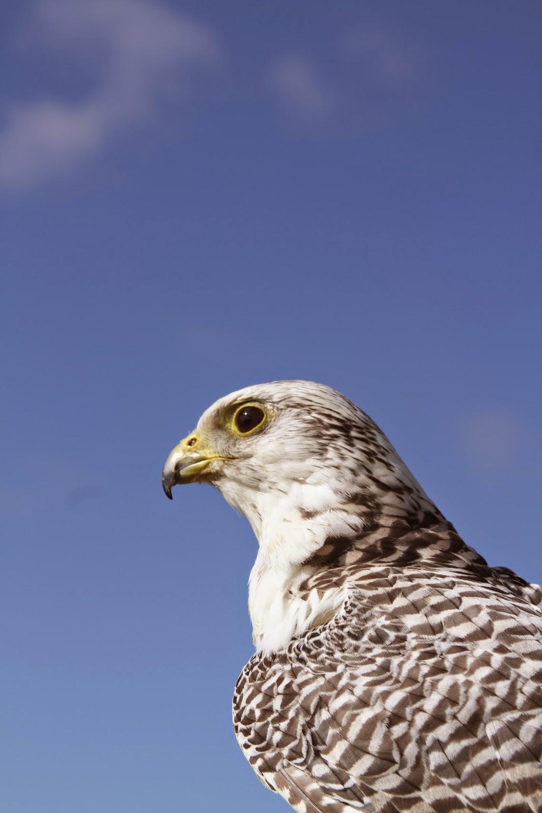 We Bird North Wales: August Update