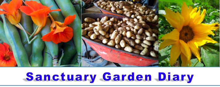 Sanctuary Garden Diary