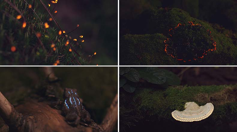 Un bosque bioluminiscente creado con mapeo de proyección digital