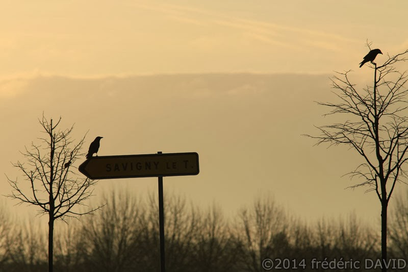 silhouettes corbeau oiseau