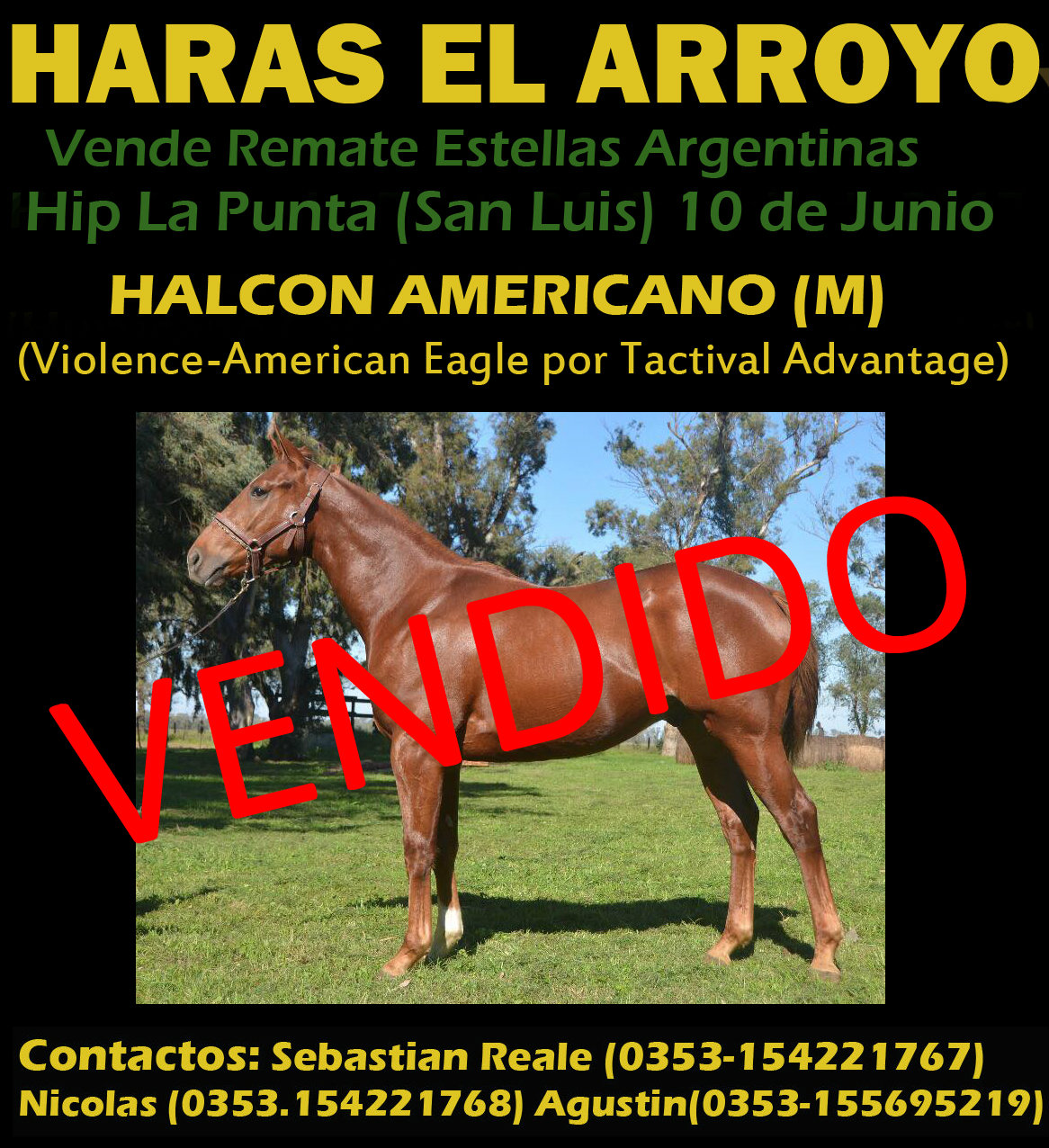 HS EL ARROYO LP 1