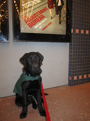 4 month old black lab puppy Romero is sitting, facing the camera, in front of a movie poster outside a movie theatre. Romero is wearing his green future dog guide jacket, a blue collar, and a red leash. The poster above him is for The Adjustment Bureau, with the tagline Fight For Your Fate. Only the bottom half of the poster is in the photo, it shows a woman in a red dress and a man in a black suit running down a sidewalk. The bright movie theatre lights are reflecting off both the movie poster and Romero's eyes.