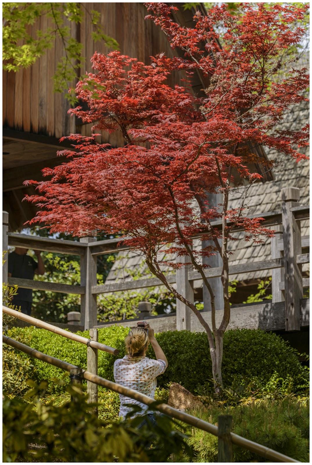 Cathy & Ron\'s Gallery: Sakura at Japanese Garden