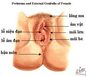 Cấu tạo hệ sinh dục nữ, cơ quan sinh dục nữ, âm đạo, âm vật