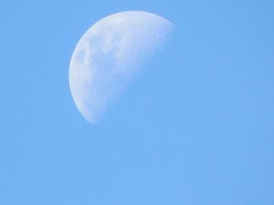 POEMAS SIDERALES ( Sol, Luna, Estrellas, Tierra, Naturaleza, Galaxias...) - Página 4 Lua+dema%C3%ADsa+e+mar%C3%ADlia