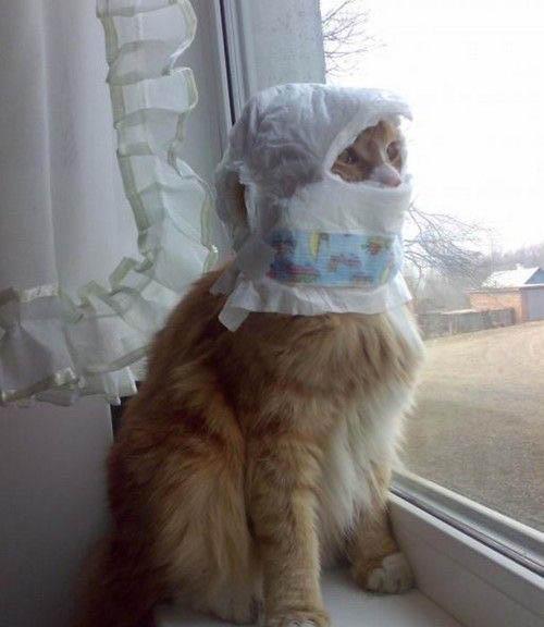 Las mejores fotos divertidas de gatos pequeños