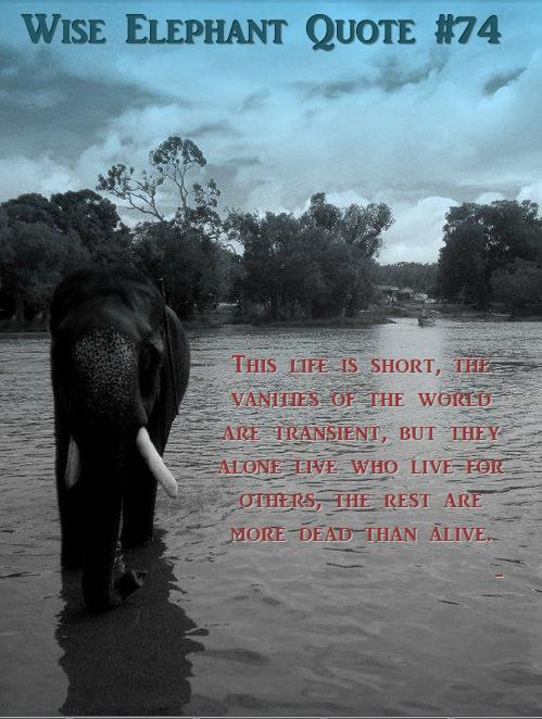 bigwords smallhands wise elephant quote 74