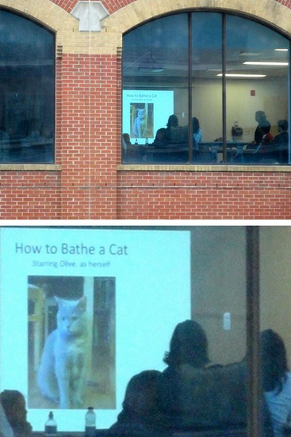 Seminar cara memandikan kucing