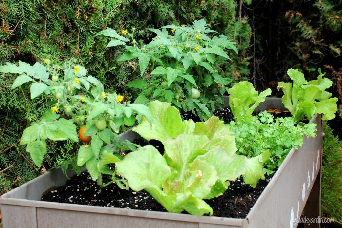 Plantando el huerto urbano de la terraza guia de jardin - Invernadero casero terraza ...
