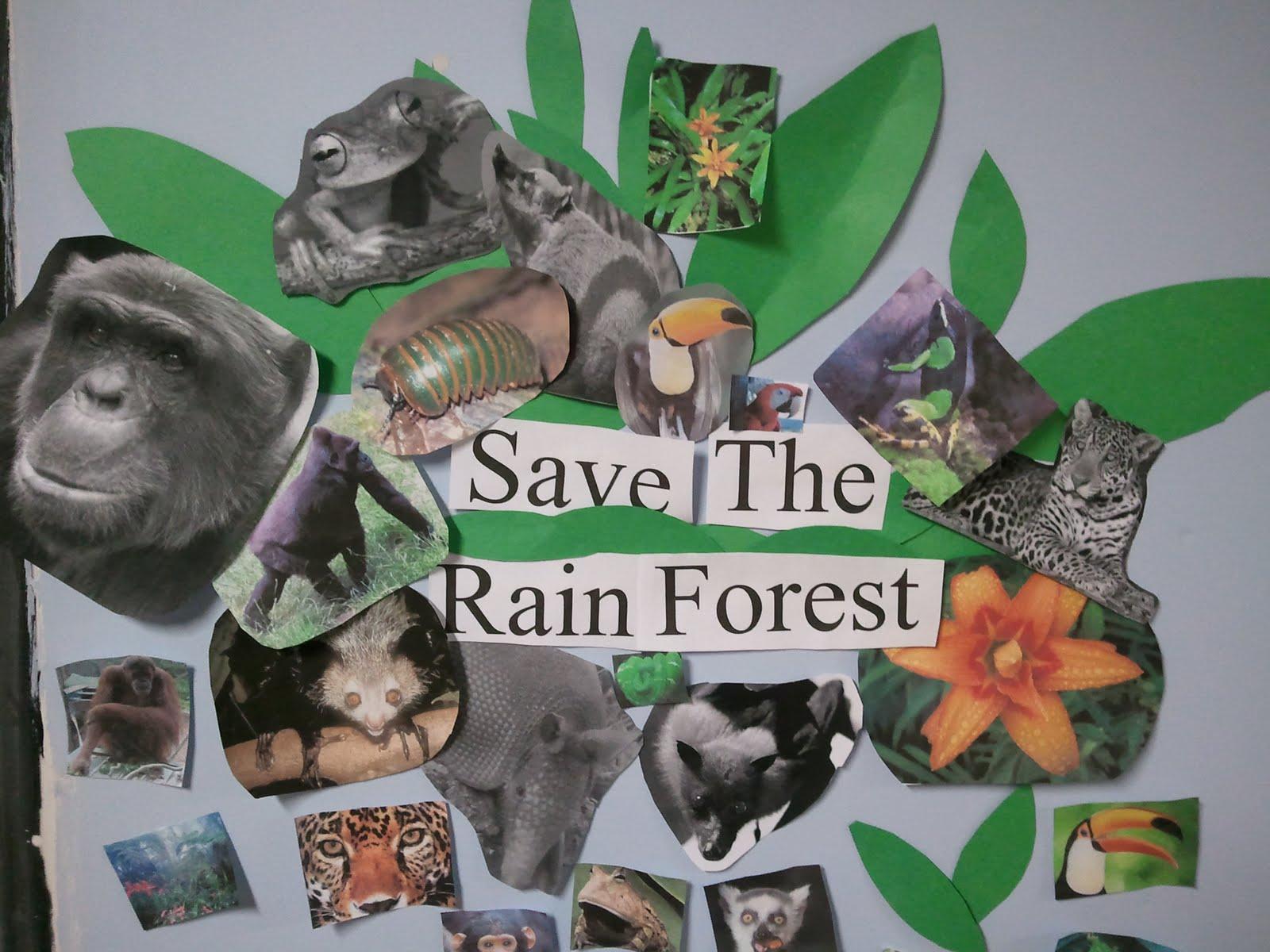 amazon rainforest plants collage. the amazon rainforest plants collage